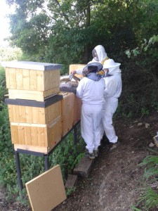 fotka včely
